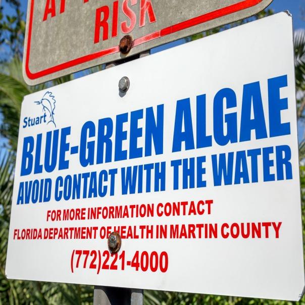 "stuart slime tour shepard park sign 1000 9005 In: John Moran's ""Florida's Summer of Slime: Stuart and Lake Okeechobee"" | Our Santa Fe River, Inc. | Protecting the Santa Fe River in North Florida"