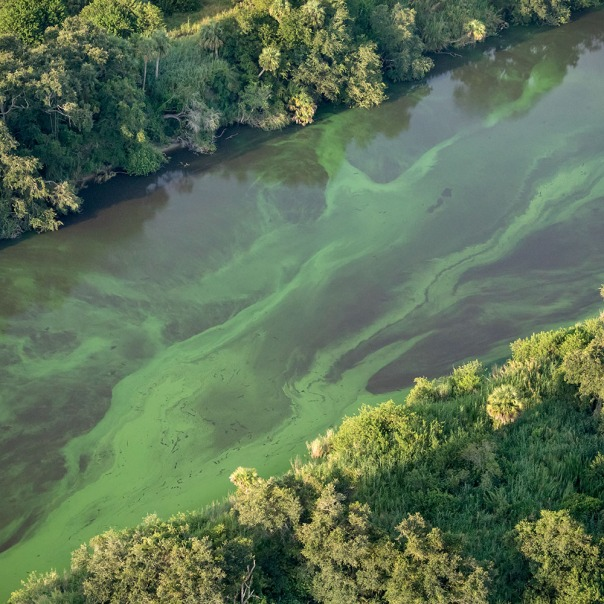 "stuart slime tour slime canal diagonal 1000 1308 In: John Moran's ""Florida's Summer of Slime: Stuart and Lake Okeechobee"" | Our Santa Fe River, Inc. (OSFR) | Protecting the Santa Fe River in North Florida"