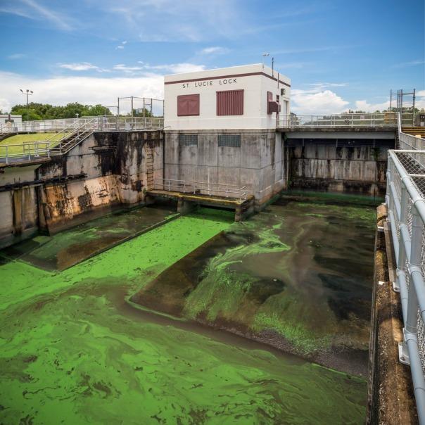 "stuart slime tour st lucie lock 1000 8499 In: John Moran's ""Florida's Summer of Slime: Stuart and Lake Okeechobee"" | Our Santa Fe River, Inc. | Protecting the Santa Fe River in North Florida"