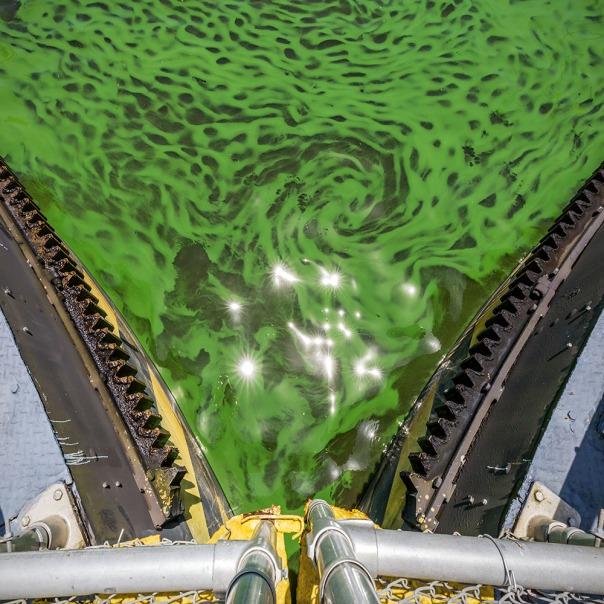 "stuart slime tour st lucie lock gears square 1000 8564 In: John Moran's ""Florida's Summer of Slime: Stuart and Lake Okeechobee"" | Our Santa Fe River, Inc. | Protecting the Santa Fe River in North Florida"
