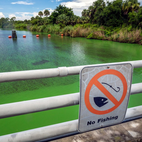 "stuart slime tour st lucie lock upstream 1000 8482 In: John Moran's ""Florida's Summer of Slime: Stuart and Lake Okeechobee"" | Our Santa Fe River, Inc. | Protecting the Santa Fe River in North Florida"