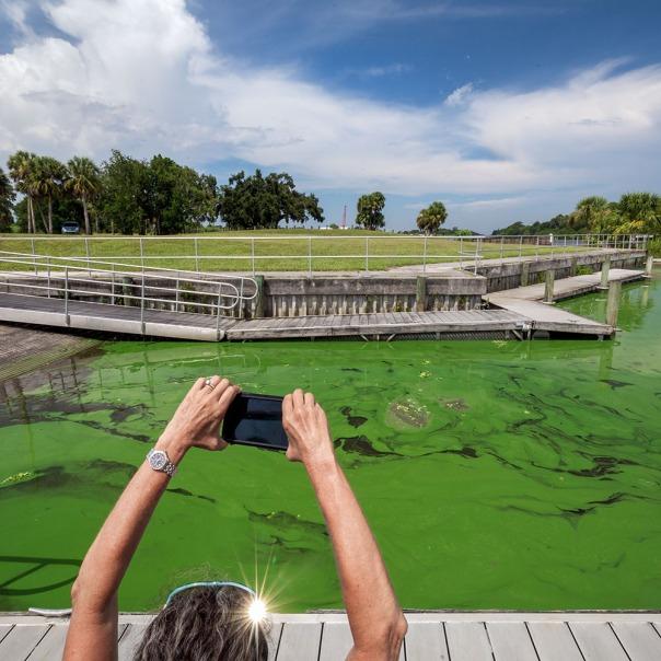 "stuart slime tour timer powers ramp square 1000 9186 In: John Moran's ""Florida's Summer of Slime: Stuart and Lake Okeechobee"" | Our Santa Fe River, Inc. | Protecting the Santa Fe River in North Florida"